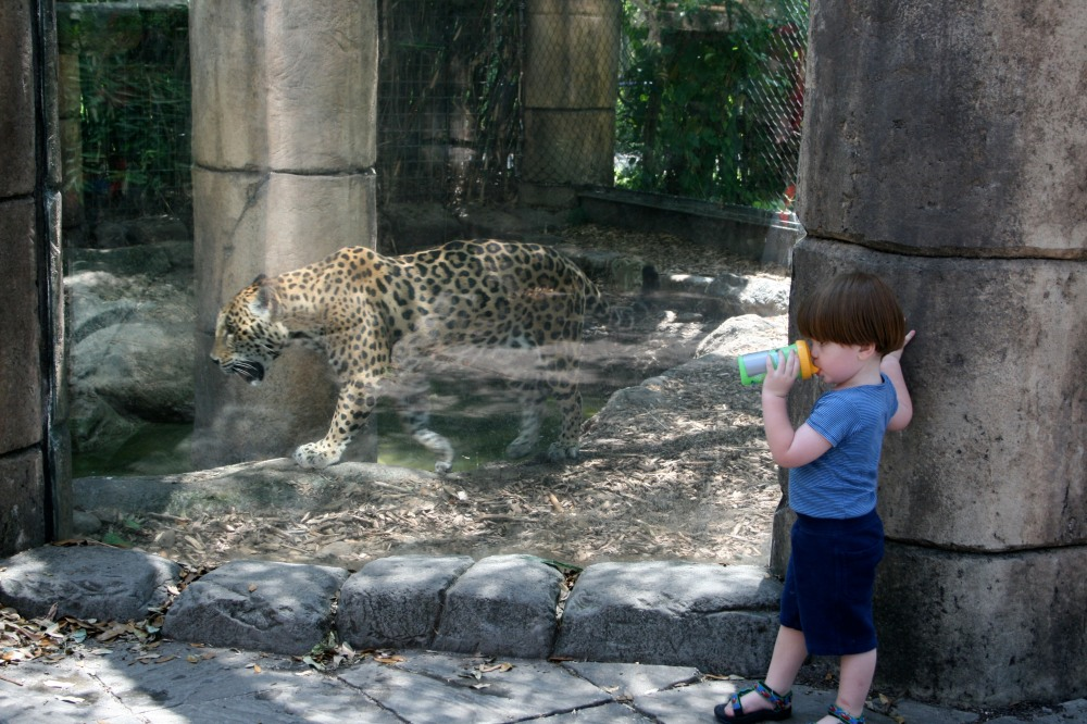 pete and the jaguar