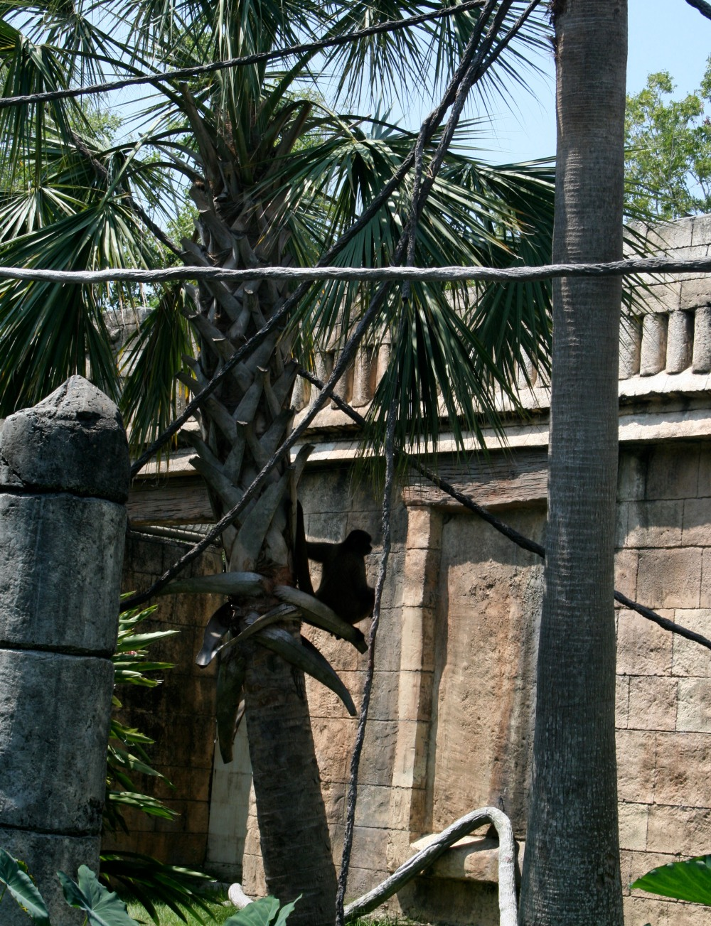 spider monkey, so ponderous