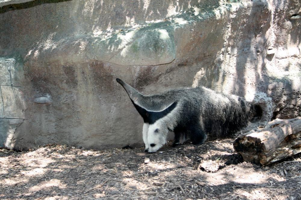 strangest animal ever