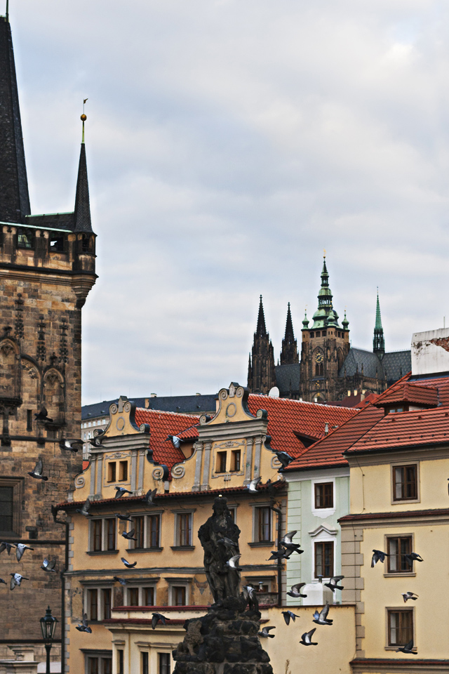 3.75_birds-Charles-Bridge-Prague