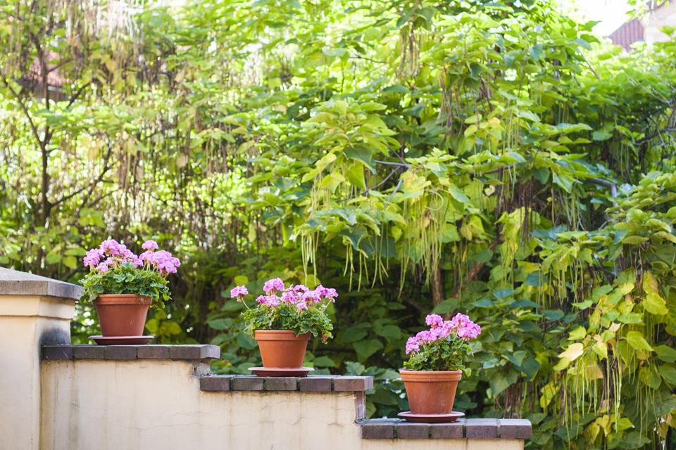 35_3-flower-pots