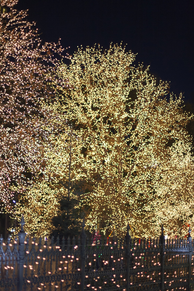 4_White-Lights-Tree-Temple-Square