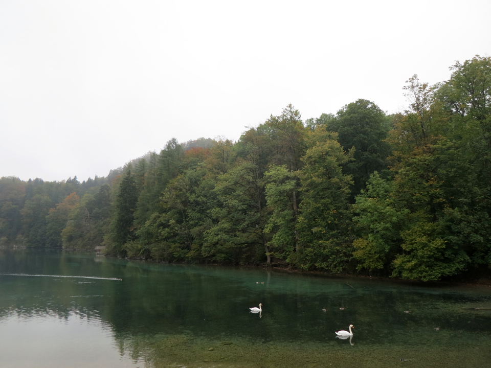 10_Alpsee-swans-clear-lake-Bavaria-Fussen
