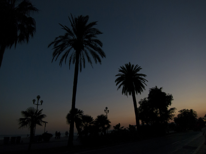 10_Palm-tree-Silhouettes-Sunset