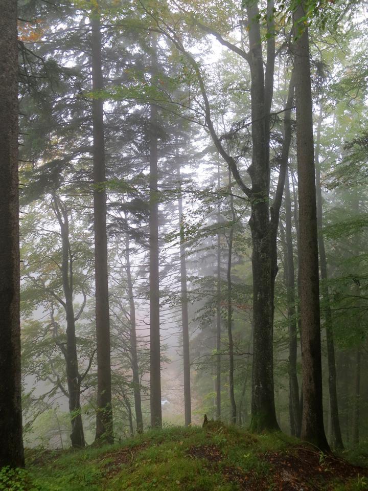 14_Misty-trees-Fussen-Bavaria-Neuschwanstein