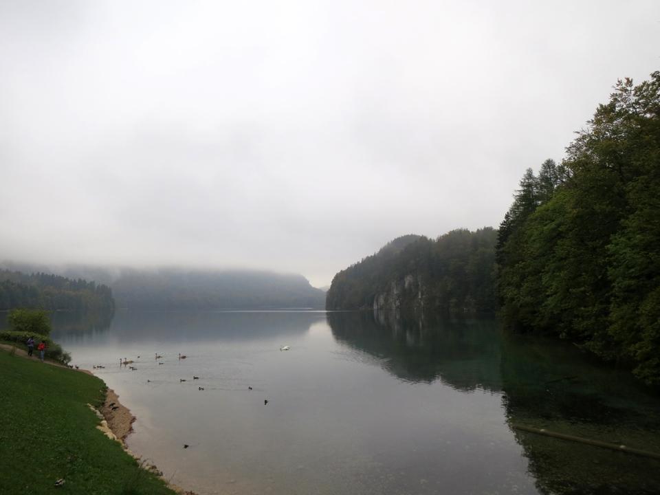 5_Alpsee-swans-fog-Bavaria