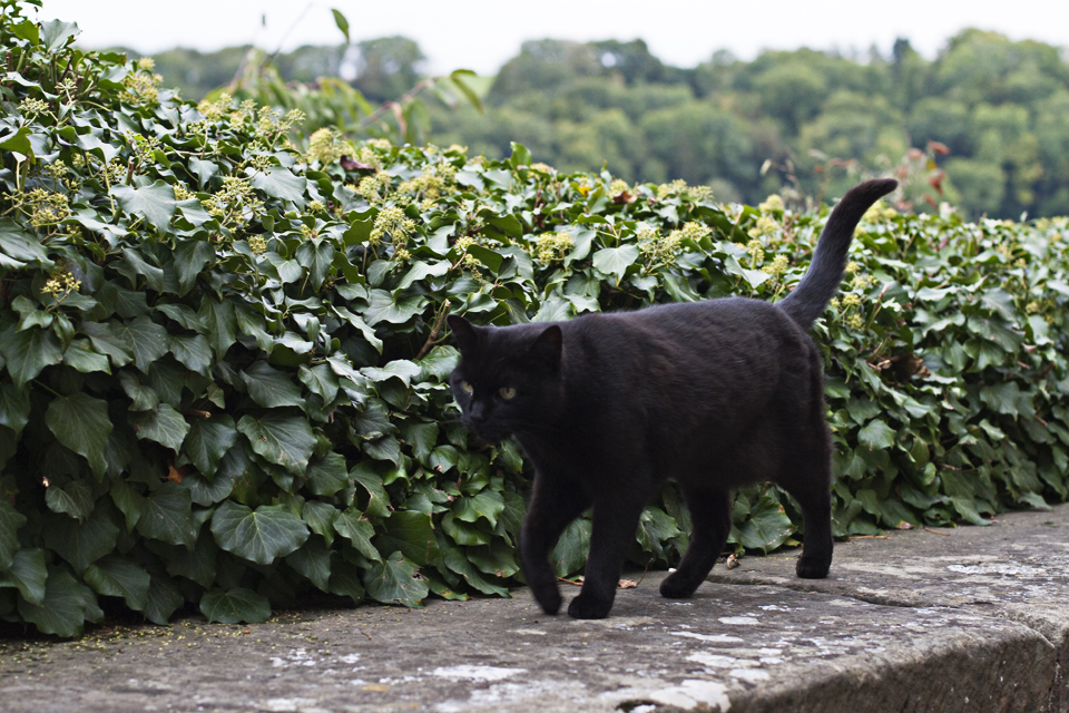 9_Black-Cat-Germany