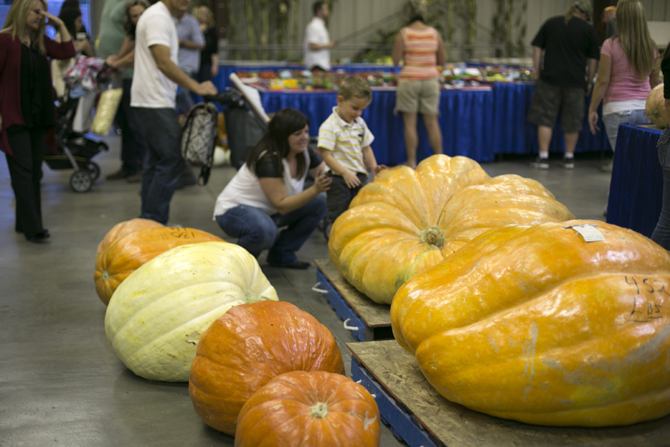 14_giant-pumpkins