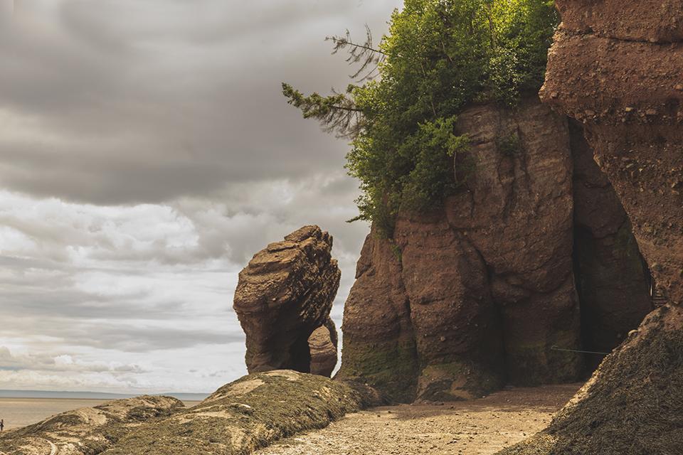 hopewell-rocks-bay-fundy-flower-pots