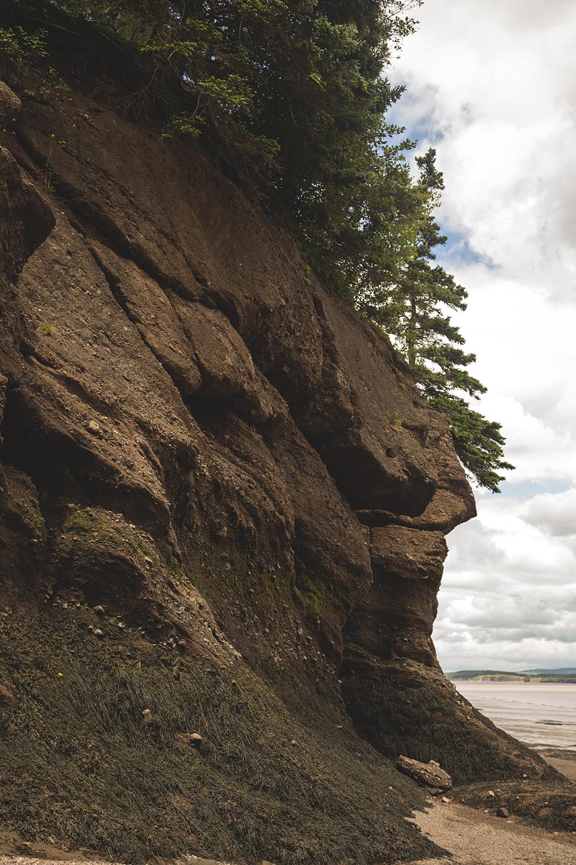 seaweed-harry-rocks-hopewell-bay-fundy