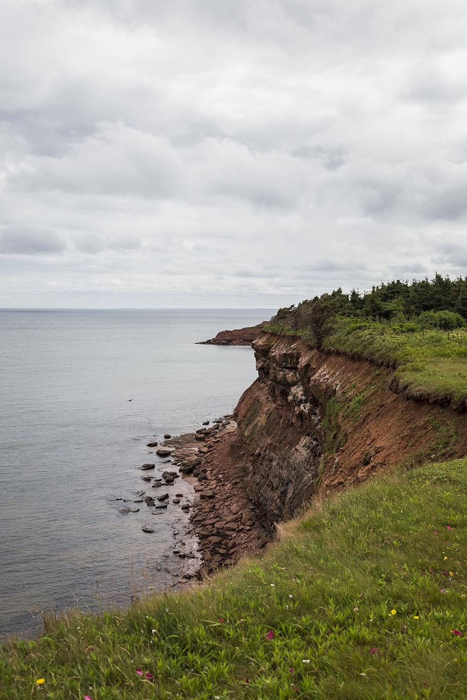 Orby-Head-Cliffs-Wildflowers