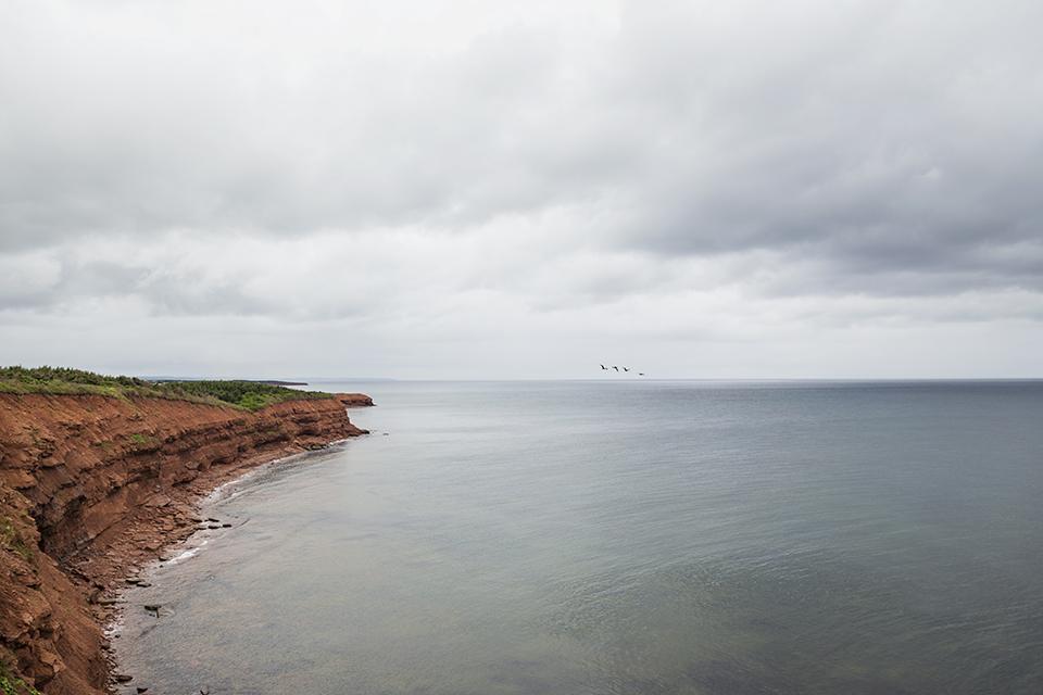 Orby-Head-Seagulls