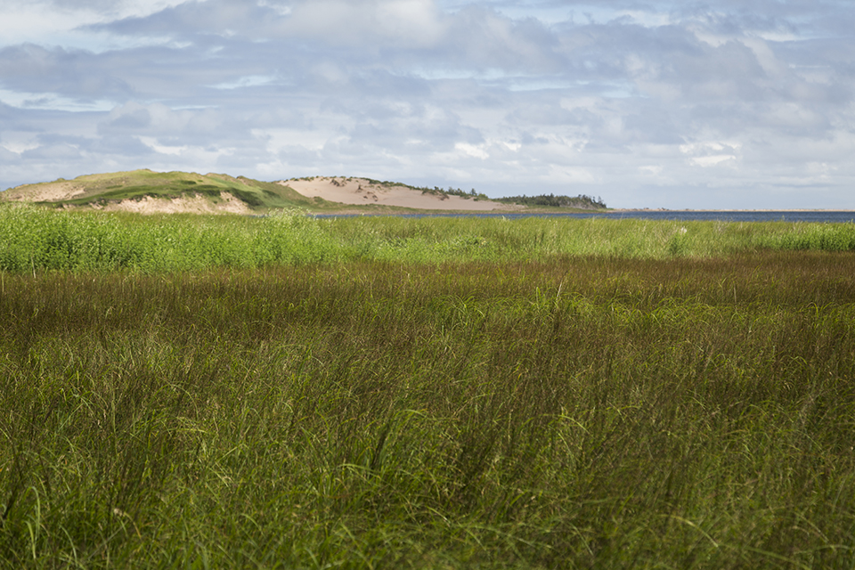PEI-Beach-Grass