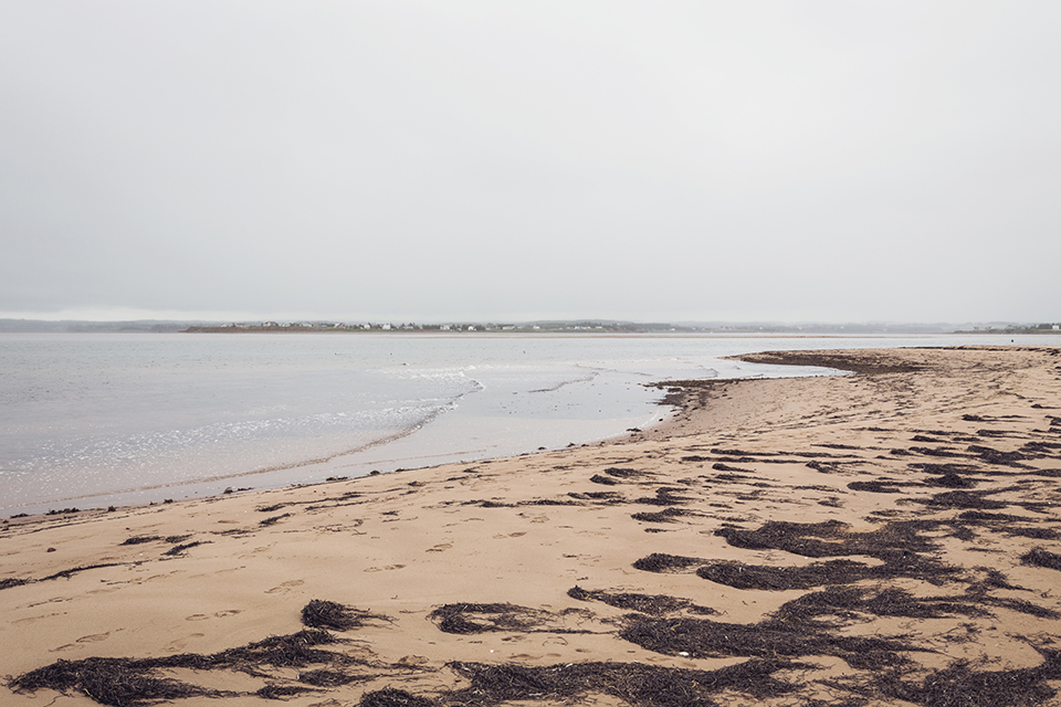 Seaweed_New-London-Beach_PEI