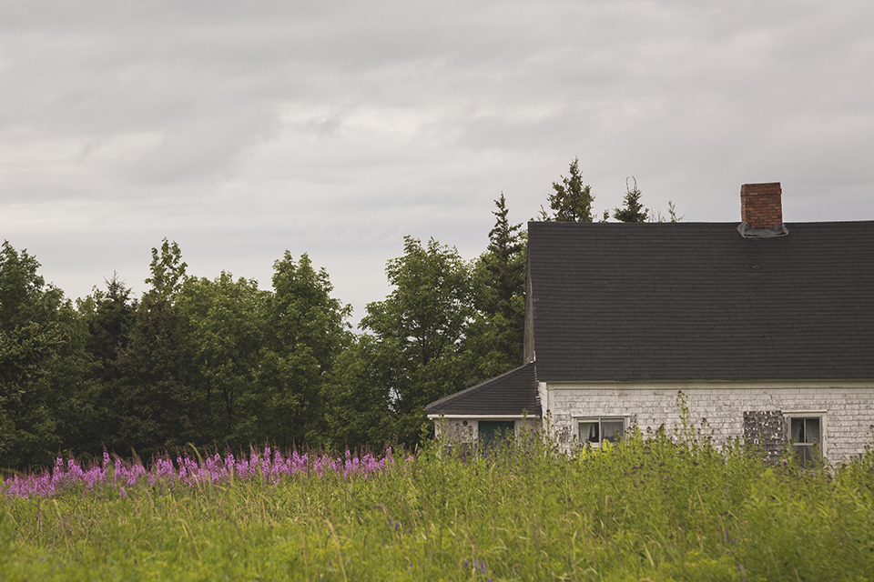 weathered-cottage-loosestrife