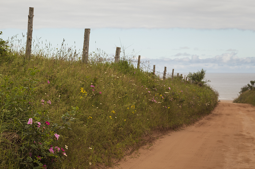 Wildflower-Road-to-Sea