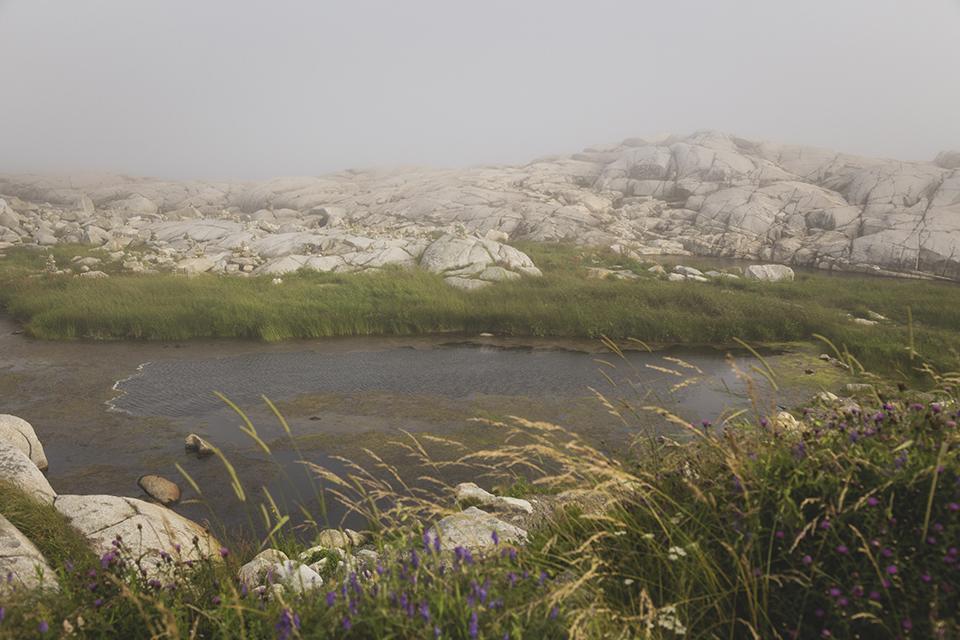 Peggys-Cove-Reeds-Fog